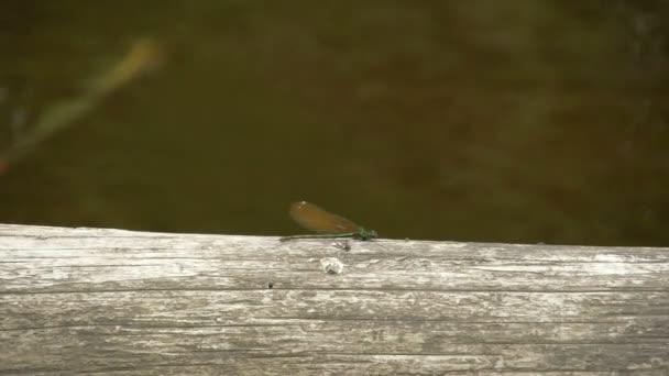 Zelená vážka na dřevo