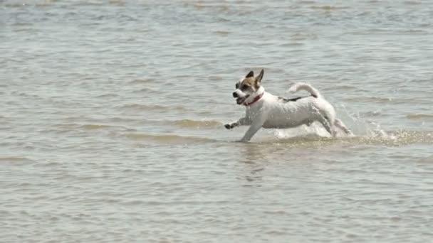 Kleiner Hund läuft am Strand fs700 odyssey 7q