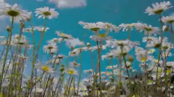 stonky a květy gerbery jsou mává fs700 odyssey 7q