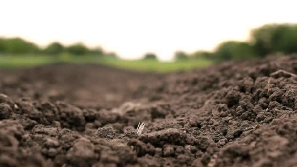 Campo arado agr colas cereales de grano crudo suelo de for Tierra suelo wallpaper