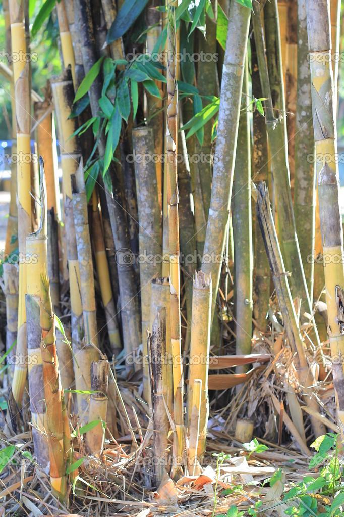 Bambus Im Garten Park Stockfoto 23962137
