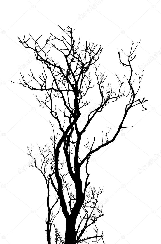 Leafless tree branches abstract background. Black and white