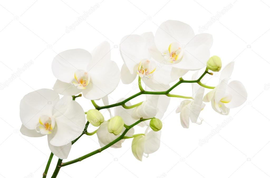 Ramas Largas De Flores Ramas Largas De Delicadas Flores De
