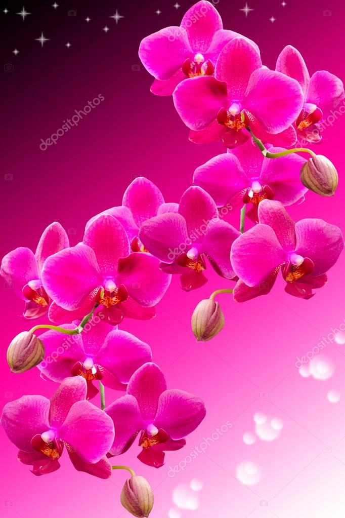 Tropical purple flowers of beautiful orchid