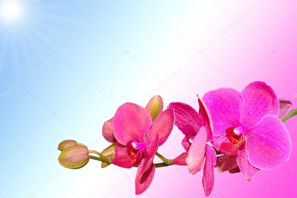 Romantic purple orchid flowers on gradient background