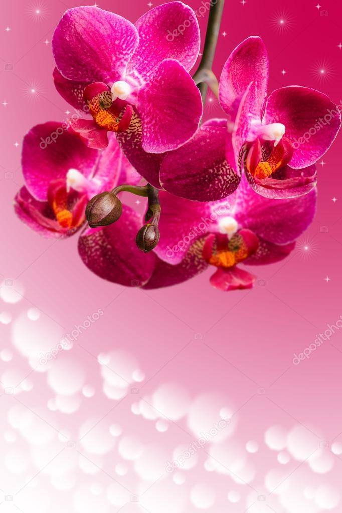 Dark purple orchid flowers on blurred gradient
