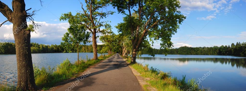 Road between ponds