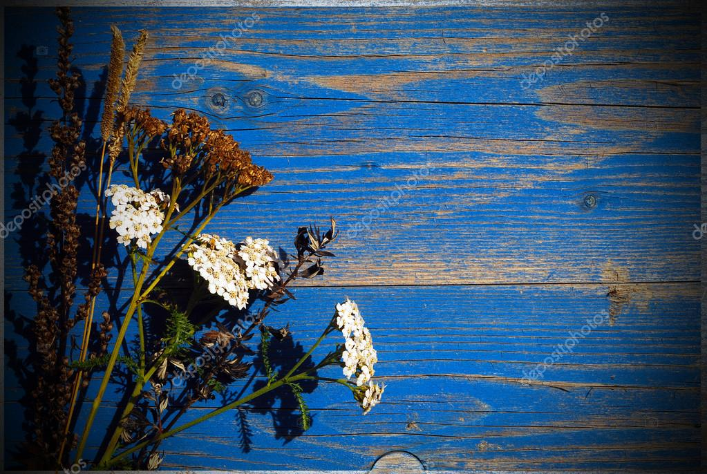 Dry flowers on blue background