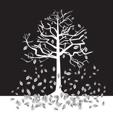 Black and white trees - autumn