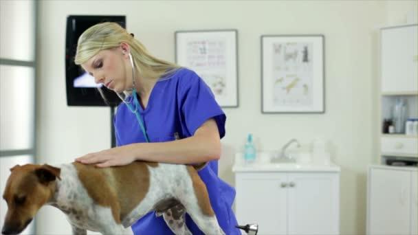 Vet kontroly psů dýchání