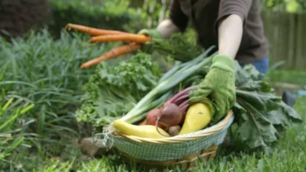 zblízka ženy výsadby ve své zahradě