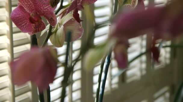 rózsaszín orchidea közelről