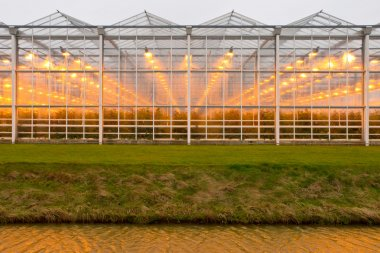 background commercial greenhouse