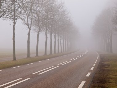 Morning fog road