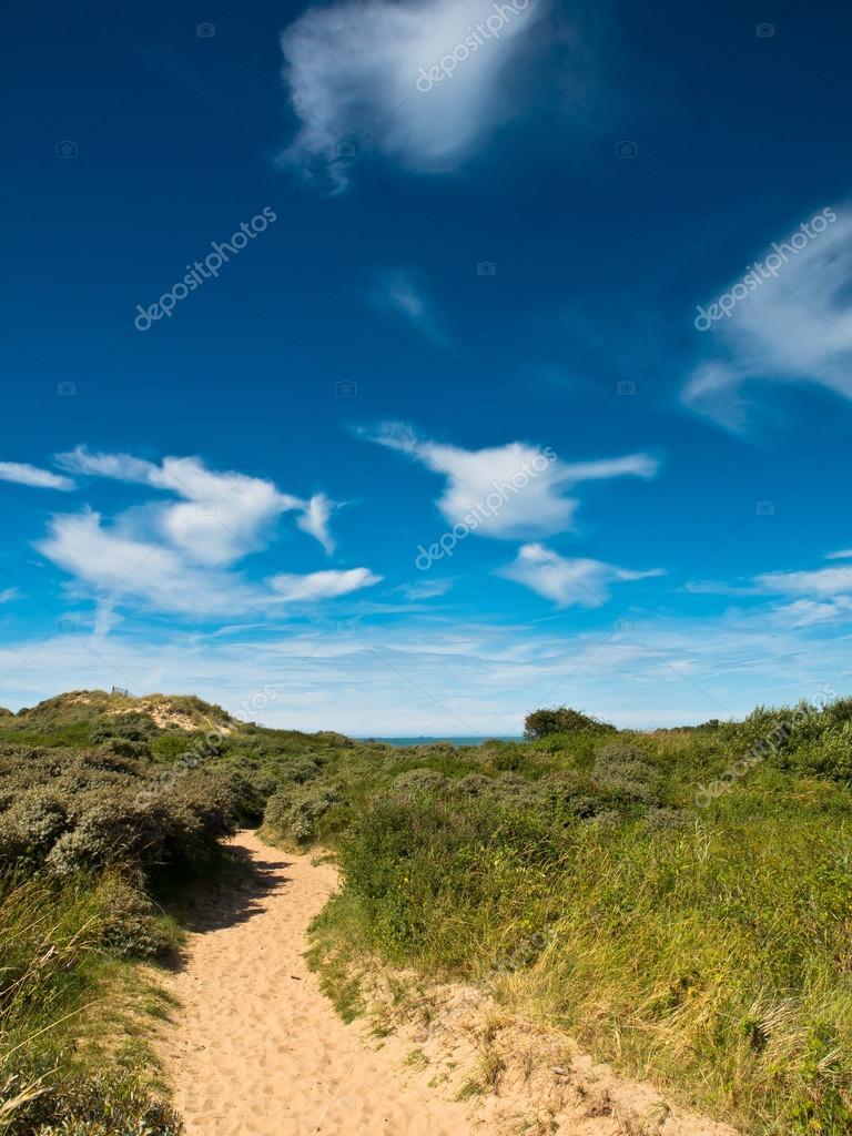 Summer landscape at the coast