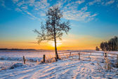 téli táj fa