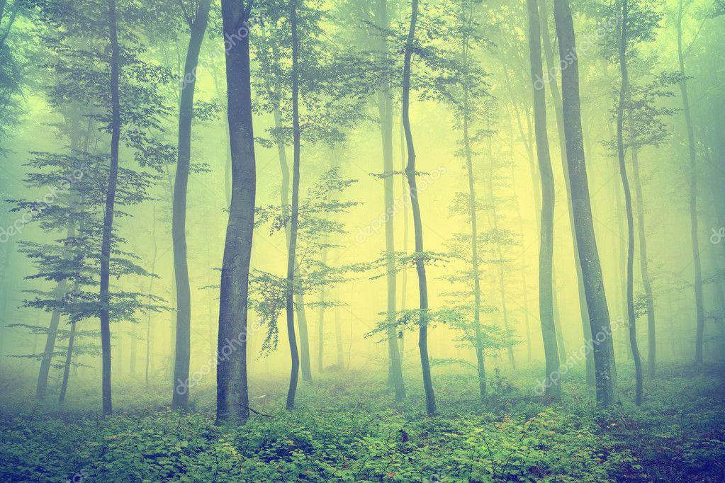Vintage spring forest