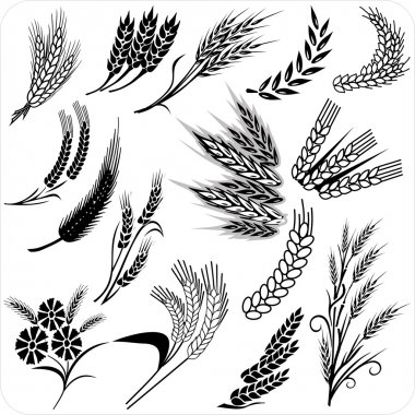 Wheat ears collection for all design stock vector