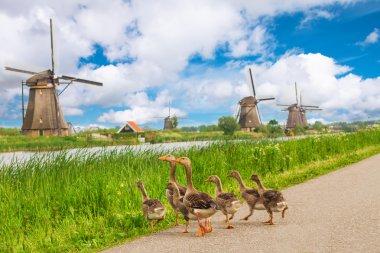"""Картина, постер, плакат, фотообои """"утки и ветряные мельницы в киндердейке, голландия """", артикул 45545633"""