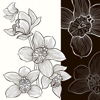 White and black orchids