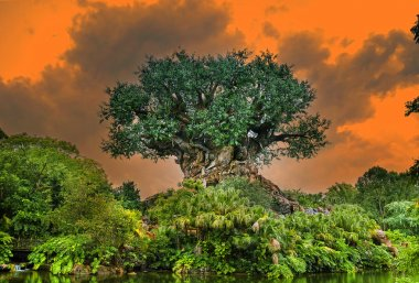 The Tree of Life in the Animal Kingdom Park, Disney World, Florida, USA: