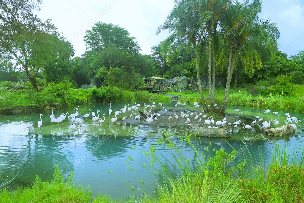 Aquatic birds in the Animal Kigdom Park, Disney World, Florida, USA: