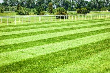 horseracing track
