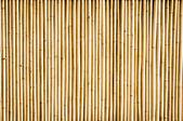 Fotografie bambus