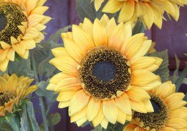 Sunflower plastic.