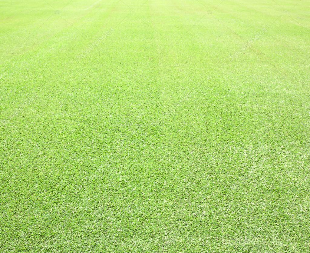 Green grass background  Top view — Stock Photo © scenery1 #47158897