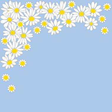 Many white daisies on blue background