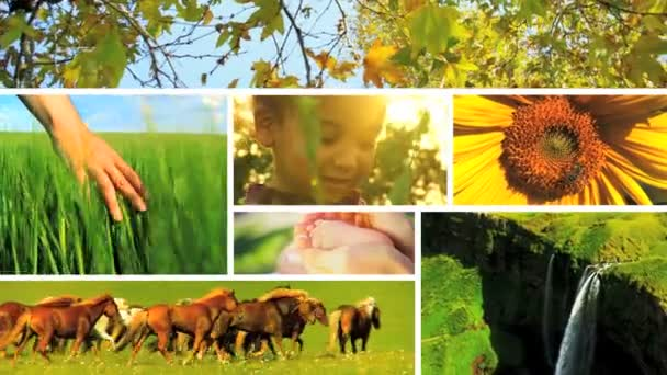 Montage of developing life and ecosystems