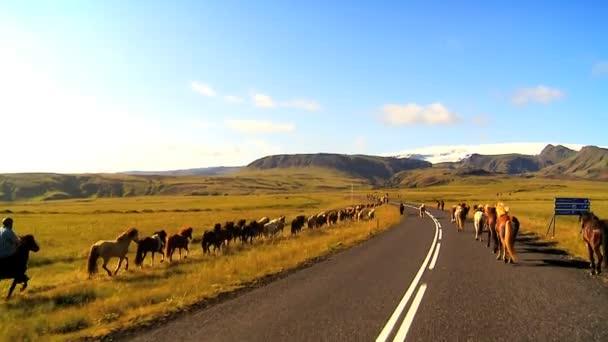 divocí koně, pohybující se po boku venkovské asfaltová silnice
