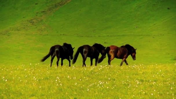 Vadlovak, a vidéki legelő
