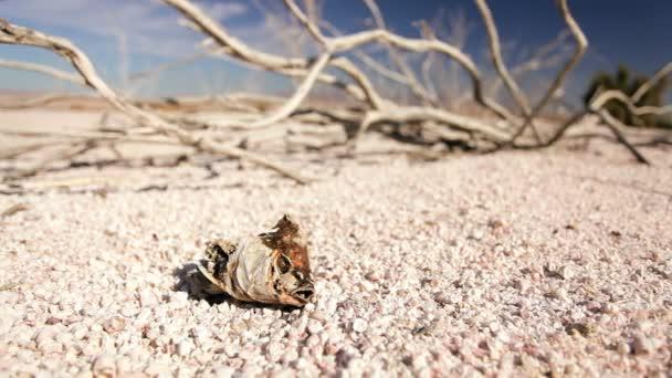 ekologické sucho DNA suchého jezera