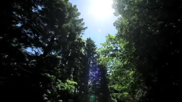 Point-of-View Driving in Giant Redwood Tree Park