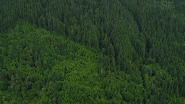 Letecký pohled na lesa v horách