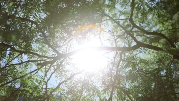 povahy zelené stromy paprskovitě sluneční světlo směrem dolů