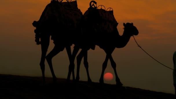 Muž vede jeho velbloudy přes poušť