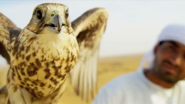 Falco sacro legato al polso proprietari