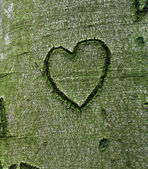 Fotografia cuore scolpito nellalbero