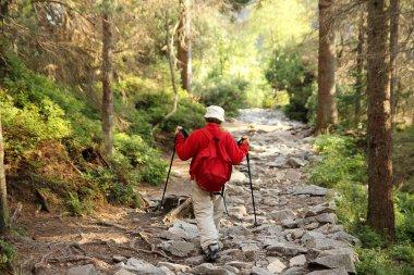 Senior nordic walking