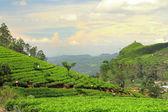 Fotografia panorama di piantagione di tè