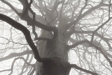 Spooky tree branches
