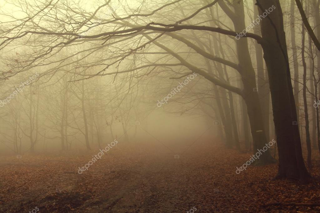 scary misty forest