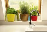 a konyha egyre gyógynövények