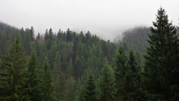 foresta di mistero