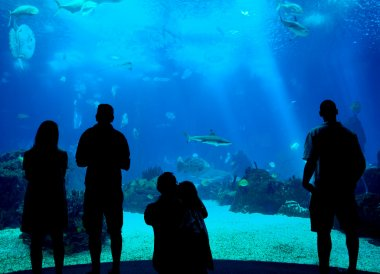 silhouettes in aquarium background