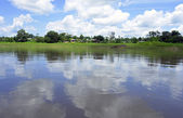 Amazonas-Landschaft