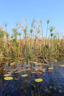 Okavango Delta water and